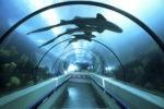 Новый океанариум открыт в Доминикане