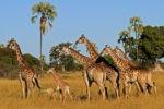 Интересное путешествие в Африку
