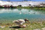 Экскурсии из Анталии в Турции