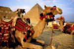 Сколько будут стоить туры в Египет после возобновления авиасообщения