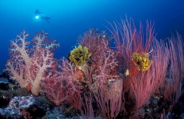 Подводный мир Юргена Фройнда