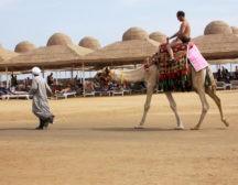 Покупка экскурсий в Египте
