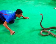 шоу змей