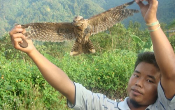 Птицепад