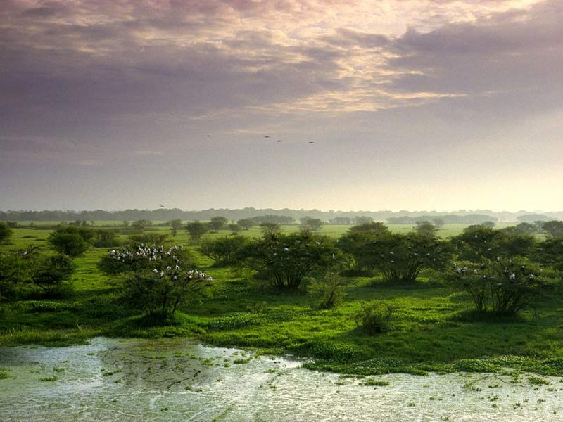 национальный парк Кеоладео