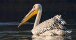Достопримечательности Индии — Национальный парк Кеоладео