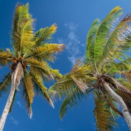 Пальмовый лес Ваи
