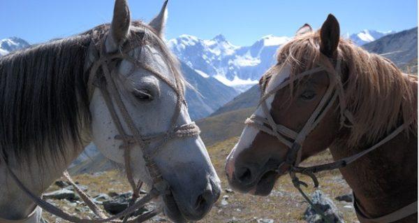 на лошадях в Белуху