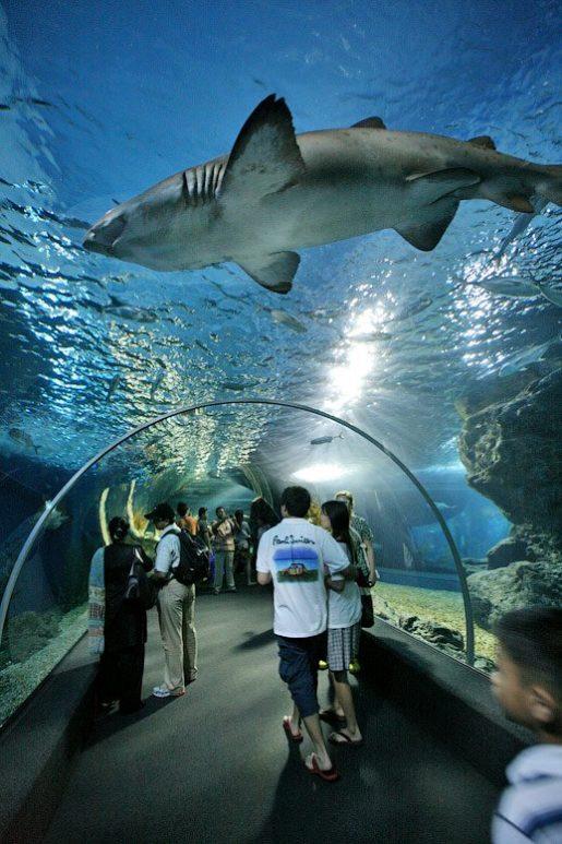 Океанариум в Таиланде